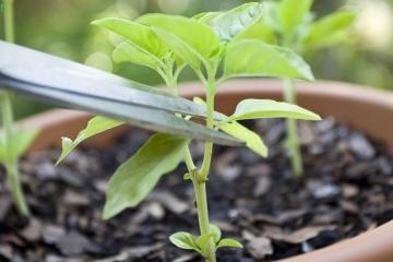 Conseils et animations pour votre jardin ou votre potager