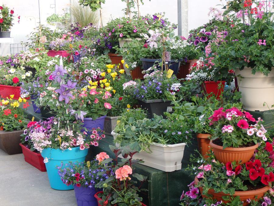 Fleurs, plantes et arbustes tout au long de l\'année ! - Argentain Plants