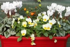 Plantes et fleurs pour votre jardin