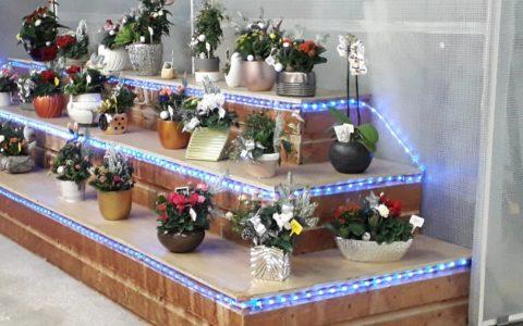 Offrir des fleurs c'est le geste le…