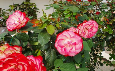 Notre jardinerie est ouverte du lun…